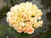 Bundles of Pale Yellow Rose Flowers. On Water Pond in Flower Show in Hong Kong China Royalty Free Stock Photo