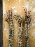 Bundles of raw sugar cane. stock photos