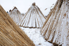 Bundles of reed Royalty Free Stock Photos