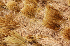 Bundles of rice after the harvest Stock Images