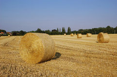 Bundles of straw Stock Images