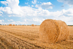 Bundles of straw on the field after harvest Royalty Free Stock Photos
