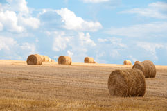 Bundles of straw on the field after harvest Royalty Free Stock Image