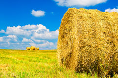 Bundles of straw Stock Image