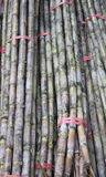 Bundles of sugar cane Royalty Free Stock Image