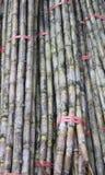 Bundles of sugar cane. Cane Royalty Free Stock Image