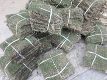 Bundles of turfs.  Stock Photography
