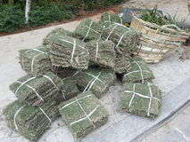 Bundles of turfs Stock Photo