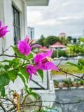 Bunga Kertas Fotografia de Stock