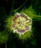 Bunga Y images libres de droits