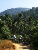 Bungalow and coconut palm. Small hotel and coconut palm plantation at Ko Chang island, Thailand Royalty Free Stock Images