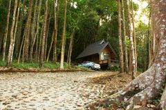 Bungalow in het regenwoud. Royalty-vrije Stock Fotografie