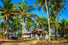 Bungalow among palm trees Stock Photo