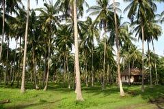 Bungalow in palmenbos Royalty-vrije Stock Foto's