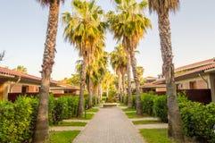 Bungalows alinhados com as palmeiras de Campofelice Foto de Stock Royalty Free