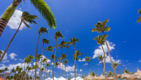 Bungalows and blue sky with palms royalty free stock images