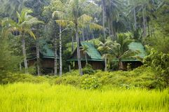 Bungalows hidden in tropical vegetation Stock Images
