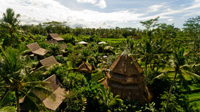 Bungalows in the jungle. Aerial view Stock Image