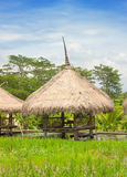 Bungalows in the rice fields Royalty Free Stock Photo