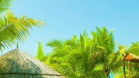 Bungalows roofs and palm trees on the tropical coast stock video footage