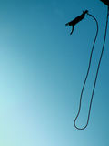 Bungee jumping 08. An action sports thrill seeker after jumping from a bungee platform Royalty Free Stock Image