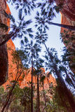 Bungle Bungles in Western Australia Royalty Free Stock Photography