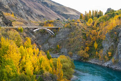 Bungy Jumping into Kawarau river Stock Photography