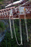 Bungy in New Zealand NZ NZL Stock Image
