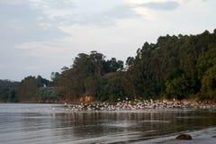 Bunh птиц на реке Стоковое Фото