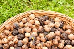 Bunh of wallnuts Royalty Free Stock Images