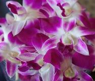 Bunke av orkidér i Hawaii Royaltyfria Bilder