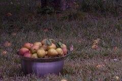 Bunke av päron Royaltyfri Fotografi