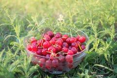 Bunke med mogna Cherry Royaltyfria Foton