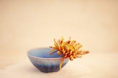 Bunke och blomma Arkivbilder