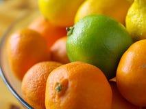 bunkefrukt Arkivbilder