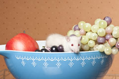 bunkefrukt tjaller Royaltyfri Foto