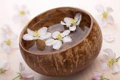 bunken blommar brunnsortwhite Royaltyfria Bilder