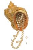 bunken pryder med pärlor havet Royaltyfri Bild