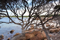 Bunker Bay: View through the Branches Royalty Free Stock Images
