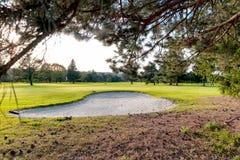 Bunker på golfbanan med träd royaltyfria bilder