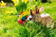 Bunnie di Pasqua sul prato con il canestro e le uova Fotografia Stock