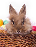 Bunnie's portrait. Cute bunnie's portrait in the basket with easter eggs Royalty Free Stock Images