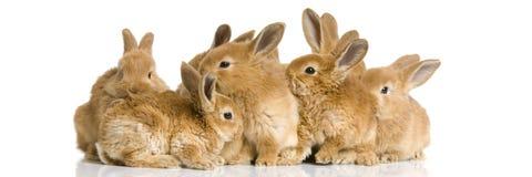 bunnies ομάδα Στοκ εικόνες με δικαίωμα ελεύθερης χρήσης