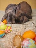 bunnies Πάσχα δύο Στοκ εικόνες με δικαίωμα ελεύθερης χρήσης