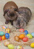 bunnies Πάσχα δύο Στοκ Φωτογραφίες
