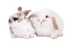 bunnies Πάσχα μωρών Στοκ φωτογραφία με δικαίωμα ελεύθερης χρήσης