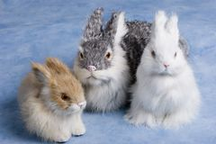 bunnies Στοκ φωτογραφίες με δικαίωμα ελεύθερης χρήσης