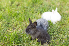 Free Bunnies Royalty Free Stock Photography - 37488657