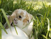 bunnies imagem de stock