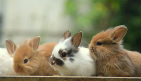 bunnies fotografia de stock